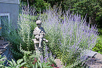 Perovskia and garden ornament of little boy statue, Russian sage in blue flowers