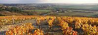 Europe/France/89/Yonne/Irancy: Le vignoble et la vallée de l'Yonne à Irancy