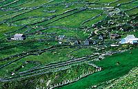 Farm houses and field stone walls, County Kerry, Ireland
