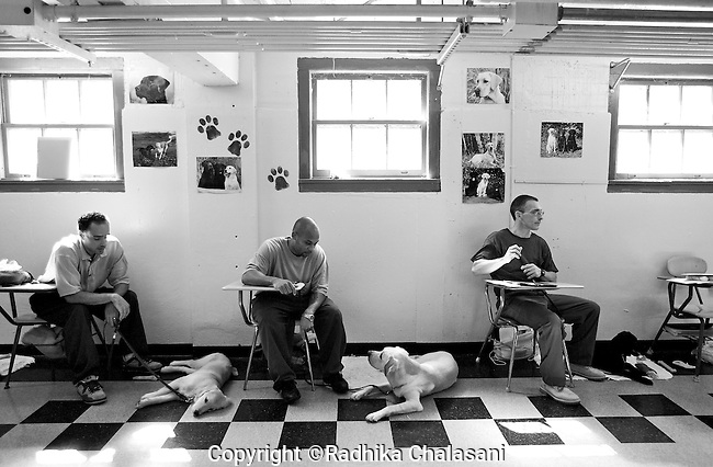 BEACON, NEW YORK:  Jesse, Ian, and Bobby (L-R) in class with instructor Carl Rothe of the Puppies Behind Bars Program at Fishkill Correctional Facility. The puppies arrive at 8 weeks-old and remain at the prisons, mostly working with one inmate, for approximately 20 months. Fishkill Correctional Facility is a medium security prison in New York with 22 men in the puppy program.
