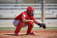 St. Louis Cardinals catcher Ivan Herrera (29) during a Minor League Spring Training Intrasquad game on March 28, 2019 at the Roger Dean Stadium Complex in Jupiter, Florida.  (Mike Janes/Four Seam Images)