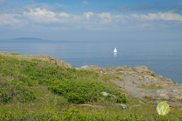 Sailboat of coast of Acadia National Park, ME