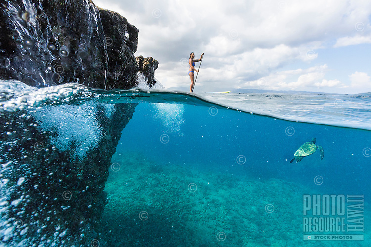 A woman standup paddles while a green sea turtle swims near her at Shark's Cove, North Shore, O'ahu.