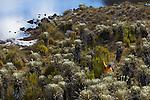 Laguna cuadrada dans la vallée des lagunillas.Sierra del Cocuy