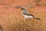 Parc national d'Uluru- Kata Tjuta