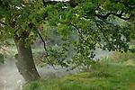 Europa, DEU, Deutschland, Nordrhein Westfalen, NRW, Rheinland, Niederrhein, Leuth, Naturpark Schwalm-Nette, Baum am Flussufer ( Nette ), Nebel, Kategorien und Themen, Natur, Umwelt, Landschaft, Jahreszeiten, Stimmungen, Landschaftsfotografie, Landschaften, Landschaftsphoto, Landschaftsphotographie, Wetter, Wetterelemente, Wetterlage, Wetterkunde, Witterung, Witterungsbedingungen, Wettererscheinungen, Meteorologie, Wettervorhersage....[Fuer die Nutzung gelten die jeweils gueltigen Allgemeinen Liefer-und Geschaeftsbedingungen. Nutzung nur gegen Verwendungsmeldung und Nachweis. Download der AGB unter http://www.image-box.com oder werden auf Anfrage zugesendet. Freigabe ist vorher erforderlich. Jede Nutzung des Fotos ist honorarpflichtig gemaess derzeit gueltiger MFM Liste - Kontakt, Uwe Schmid-Fotografie, Duisburg, Tel. (+49).2065.677997, archiv@image-box.com, www.image-box.com]