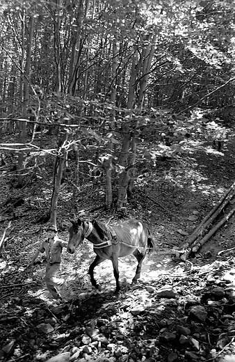ROMANIA, Maramures, Ieud, July 2000..A sheperd carries the wood with his horse..ROUMANIE, Maramures, Ieud, Juillet 2000..Un berger tire des troncs d'arbres avec son cheval..© Bruno Cogez