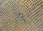 """A worker harvests oysters from one of the hundreds of growing pillars during low tide at an oyster plantation on the bank of Ganh Rai bay, Vietnam. <br /> <br /> The mesmerising image was taken by photographer Trung Pham Huy and shows holes the worker has dug to access the pillars with the Oysters attached.<br /> <br /> Mr Huy said """"Each grown pillar will house around 20-30 for baby oysters to stick onto, and are then collected by a worker.""""<br /> <br /> They will work for hours each day during low tide. 1 kg of harvested oysters costs just over £1"""".<br /> <br /> Please byline: Trung Pham Huy/Solent News<br /> <br /> © Trung Pham Huy/Solent News & Photo Agency<br /> UK +44 (0) 2380 458800"""
