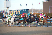 The field nears the clubhouse turn at Aqueduct early in the Gotham. That's Hansen, the white horse, sticking out like a sore thumb.