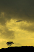 Lone Tree and cairn on Duchielaw, Fereneze Braes above Barrhead, East Renfrewshire