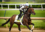 LOUISVILLE, KY - MAY 04: My Man Sam gallops in preparation for the Kentucky Derby at Churchill Downs on May 04, 2016 in Louisville, Kentucky.(Photo by Alex Evers/Eclipse Sportswire/Getty Images)