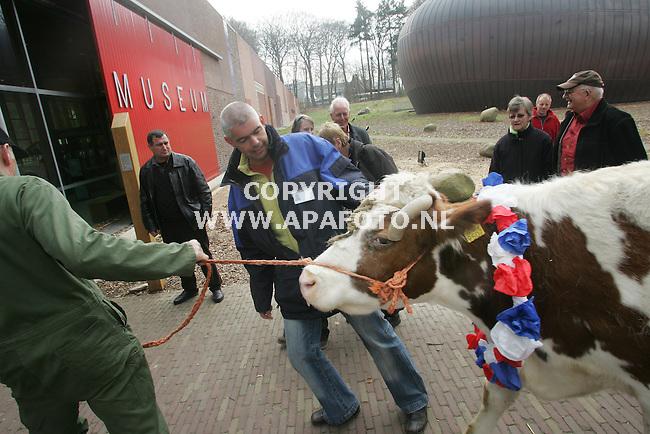 """Arnhem, 290307<br /> Vandaag kreeg het Openluchtmuseum een nieuwe bewoonster, de 19jarige MRIJ koe """"Corrie van Anna"""". De koe is niet zomaar een zeer oude koe maar vertegenwoordigt ook het levensverhaal van een bijzondere vrouw. Begin 2007 overleed in Doetinchem haar baas Anna Reijntjes, zij heeft tot het laatst toe sober geleefd: In haar boerderijtje stond te tijd stil: ze sliep in een bedstee, had geen verwarming. wc of douche. Met melkbussen op haar bagagedrager verkocht ze de melk vers aan huis, ze was een keuterboerin.<br /> Haar laatste wens was dat haar twee koeien een goed tehuis kregen. Nu is Anna een Museum koe. <br /> <br /> Foto: Sjef Prins - APA Foto"""