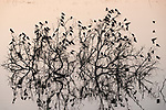Damon, Texas; a flock of tree swallows perched on a tree branch rising out of the slough, silhouette against a sunrise sky