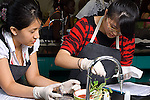 Education High School science class biology two girls working together on lab wearing protective latex gloves
