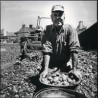 Europe/France/Bretagne/29/Finistère/Ile de Batz : Mr Prigent récolte ses pommes de terre d'agriculture biologique
