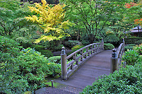 Fall color with bridge in Japanese Gardens. Portland. Oregon