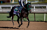October 30, 2019: Breeders' Cup Juvenile Turf Sprint entrant Another Miracle, trained by Gary Contessa, exercises in preparation for the Breeders' Cup World Championships at Santa Anita Park in Arcadia, California on October 30, 2019. Carolyn Simancik/Eclipse Sportswire/Breeders' Cup/CSM