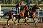 ARCADIA, CA  OCTOBER 30: Breeders' Cup Dirt Mile entrant Giant Expectations, trained by Peter A. Eurton, exercises in preparation for the Breeders' Cup World Championships at Santa Anita Park in Arcadia, California on October 30, 2019.  (Photo by Casey Phillips/Eclipse Sportswire/CSM)