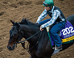 DEL MAR, CA - OCTOBER 30: Elate, owned by Claiborne Farm & Adele Dilschneider and trained by William I. Mott, exercises in preparation for Longines Breeders' Cup Distaff at Del Mar Thoroughbred Club on October 30, 2017 in Del Mar, California. (Photo by Jon Durr/Eclipse Sportswire/Breeders Cup)