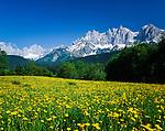 Austria, Tyrol, near Ellmau: flower meadow and Wilder Kaiser mountains | Oesterreich, Tirol, bei Ellmau: Blumenwiese vorm Wilden Kaiser