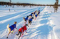 Karin Hendrickson runs down the trail after leaving the Kaltag checkpoint during the 2017 Iditarod on Monday morning March 12, 2017.<br /> <br /> Photo by Jeff Schultz/SchultzPhoto.com  (C) 2017  ALL RIGHTS RESERVED