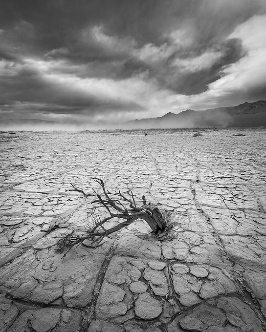 A lone sagebrush in the cracked desert playa with a sandstorm in the distance.