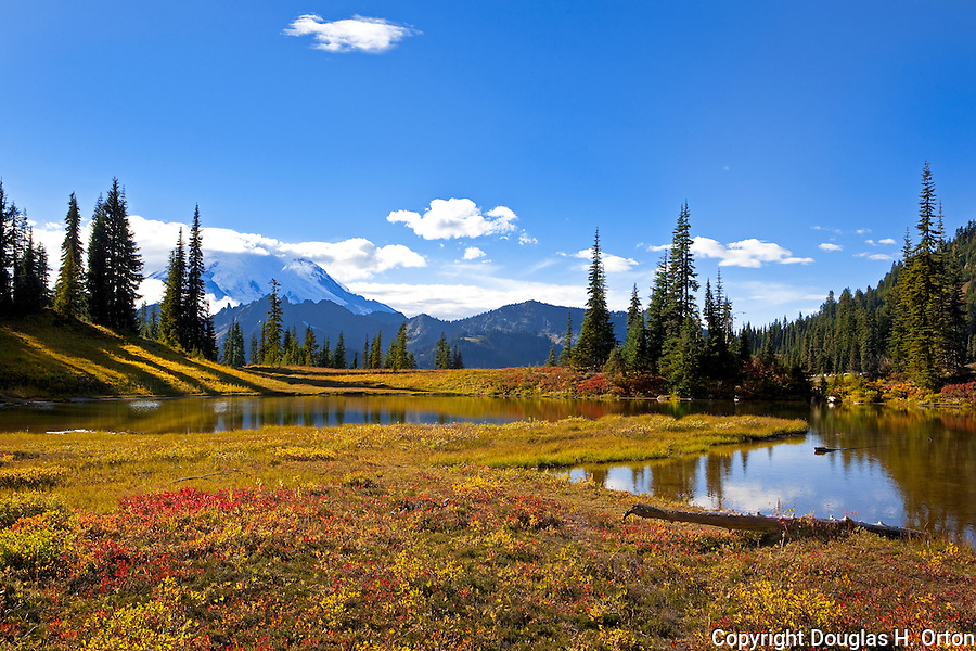 Tipsoo Lakes straddle Highway 410 at Chinook Pass, Mount Rainier National Park.  Native plants provide stunning color in fall.  Naches Loop Trail passes Upper Tipsoo Lake.