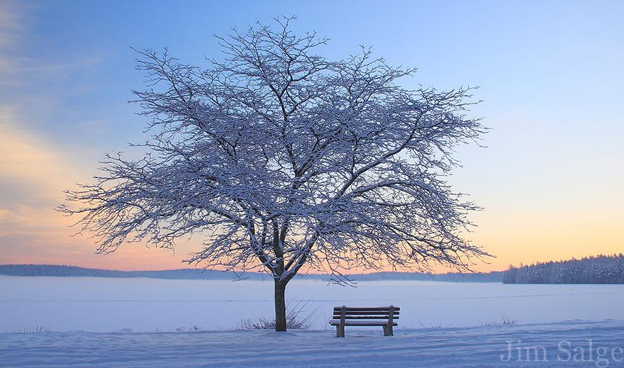 Winter in the Park - Lake Massabesic