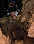 Guillermo de Anda, diving in a cenote filled with Mayan artifacts, inspects a offering pot. Near Homum, Yucatan, Mexico.