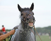Wolfe Tone gets a bath and smiles for the camera after the 8th race at Fair Hill.