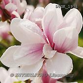 Gisela, FLOWERS, BLUMEN, FLORES, photos+++++,DTGK1971,#f#