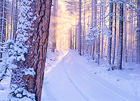 Road in Deschutes National Forest with snow and sunburst. Oregon.