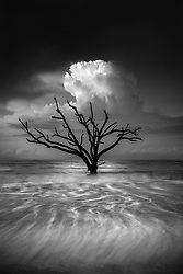 Artist Edition: 15/200 Limited<br /> Located on the east coast of South Carolina, the beach of Edisto Island is scattered with driftwood and skeleton trees. Coastal erosion has killed these trees, but some still stand upright, rooted firm in the soil. While this area has been widely photographed before, I traveled here in the summer of 2015 with the intention of creating something unique. I wanted to make a photograph that captured the subtle beauty and raw emotion one feels when looking at these old trees which, although dead, are alive in their own right and seemingly transcend time. I spent several days here, each morning going out to the beach in different conditions. This one particular morning, the weather didn't seem very dramatic, and most of my hopes were dashed. But as the sun began to rise above the horizon, the light illuminated a lone cloud which framed this one tree perfectly... a nice silhouette with the light reflecting off the water below. I knew I would only have seconds to capture this moment, and after finding the perfect shutter speed I knew I had it. The dramatic light and an incoming tide had produced a brief but unforgettable moment at sunrise this summer morning.