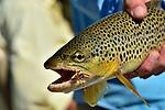 FISHING CREEK OPENING DAY
