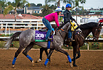 DEL MAR, CA - OCTOBER 02: Hunt, owned by Mike House and trained by Philip D'Amato, exercises in preparation for Breeders' Cup Mile at Del Mar Thoroughbred Club on November 2, 2017 in Del Mar, California. (Photo by Anna Purdy/Eclipse Sportswire/Breeders Cup)