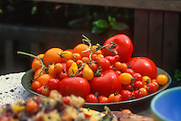 home grown organic tomatoes in dish on kitchen table