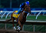 DEL MAR, CA - OCTOBER 30: Gun Runner, owned by Winchell Thoroughbreds LLC & Three Chimneys Farm LLC and trained by Steven M. Asmussen, exercises in preparation for Breeders' Cup Classic  at Del Mar Thoroughbred Club on {mothname} 30, 2017 in Del Mar, California. (Photo by Alex Evers/Eclipse Sportswire/Breeders Cup)