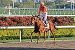 07 February 2010:  Thunder Brew with jockey Jesus Castanon in the Eighth race The Hallandale Beach Stakes at Gulfstream Park in Hallandale Beach, FL.