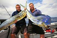 two Mahi mahi, dorado or dolphin fish, Coryphaena hippurus, cow and bull, caught by two fishermen, Australia, Pacific Ocean, sportfishing