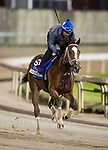 October 27, 2018 : Golden Mischief, trained by Brad Cox, exercises in preparation for the Breeders' Cup Filly & Mare Sprint at Churchill Downs on October 27, 2018 in Louisville, Kentucky. Evers/ESW/CSM