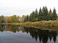 Reflection resplendent on the oxbow of pristine Wolf Creek, Alberta, in the fall...