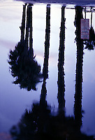 Silhouetted palm trees reflected in water<br />