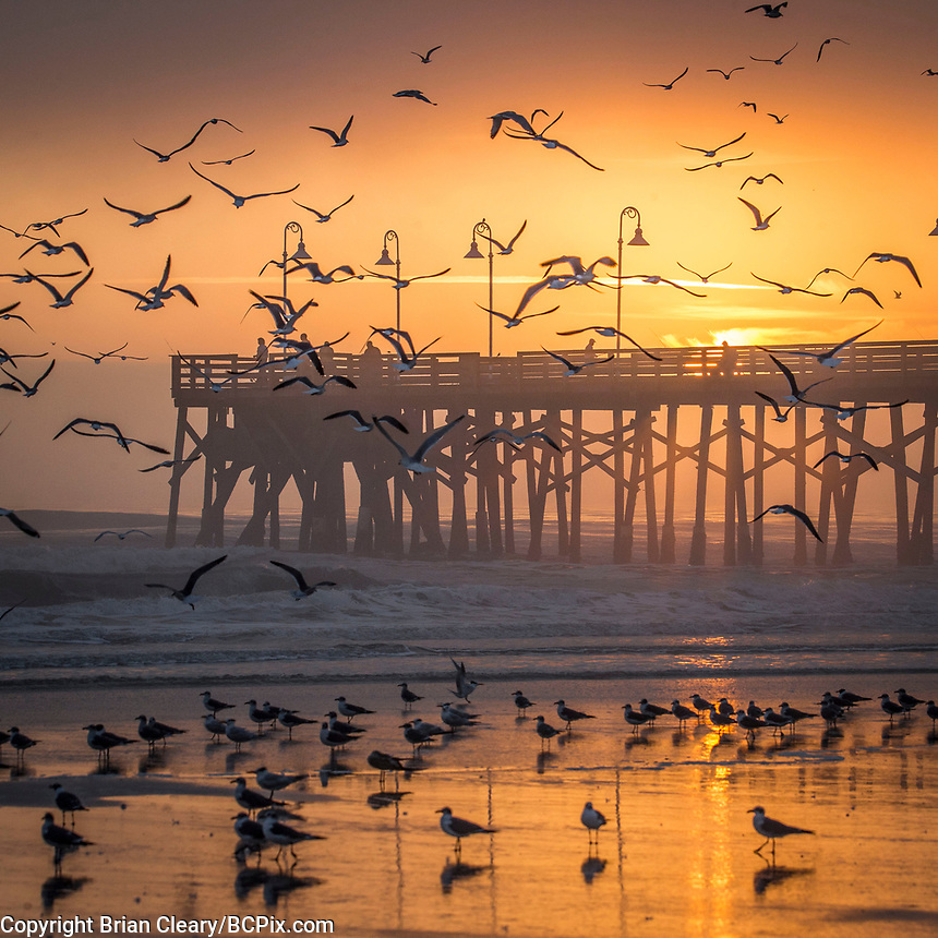 Birds Flock at Sunrise over the Main Street Pier, Daytona Beach, FL, February 2018. (Photo by Brian Cleary/www.bcpix.com)