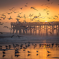 Birds Flock at Sunrise over the Main Street Pier, Daytona Beach, FL, February 2018. (Photo by Brian Cleary/www.bcpix.com)