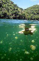 JELLY FISH LAKE