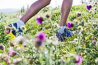 Close up on trail running shoes with thistle flowers in the foreground.