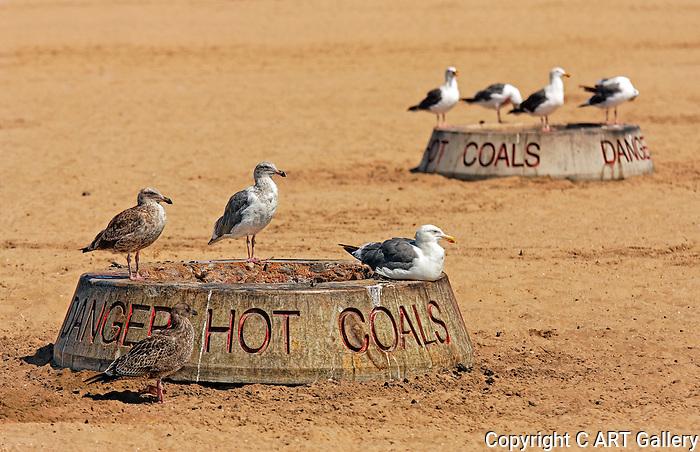 Seagulls on fire pots, Newport Beach, CA.