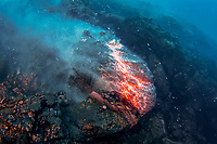 pillow lava erupts from underwater lava tube at underwater eruption of Kilauea Volcano, Big Island, Hawaii, USA, Pacific Ocean