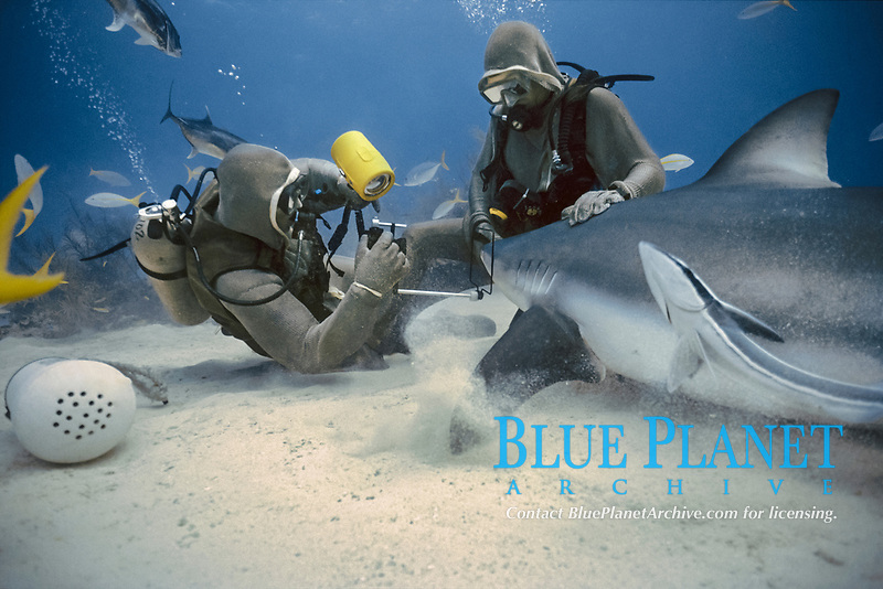 Photographer photographing eye of Caribbean Reef Shark (Carcharhinus perezii), Bahamas - Caribbean Sea.