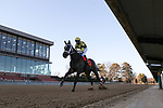 January 22, 2021: Caddo River (7) with jockey Florent Geroux aboard before crossing the finish line in the Smarty Jones Stakes at Oaklawn Racing Casino Resort in Hot Springs, Arkansas on January 22, 2021. Justin Manning/Eclipse Sportswire/CSM